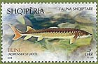 Albania new post stamp Fauna - Fish